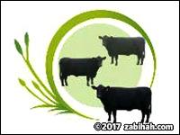 Halal Pastures
