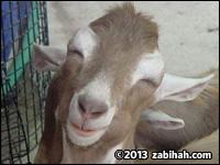 Hira Halal Meat (II)